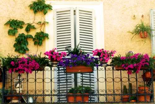 Ghaleb editore iniziative culturali fiori alle finestre - Si espongono alle finestre ...
